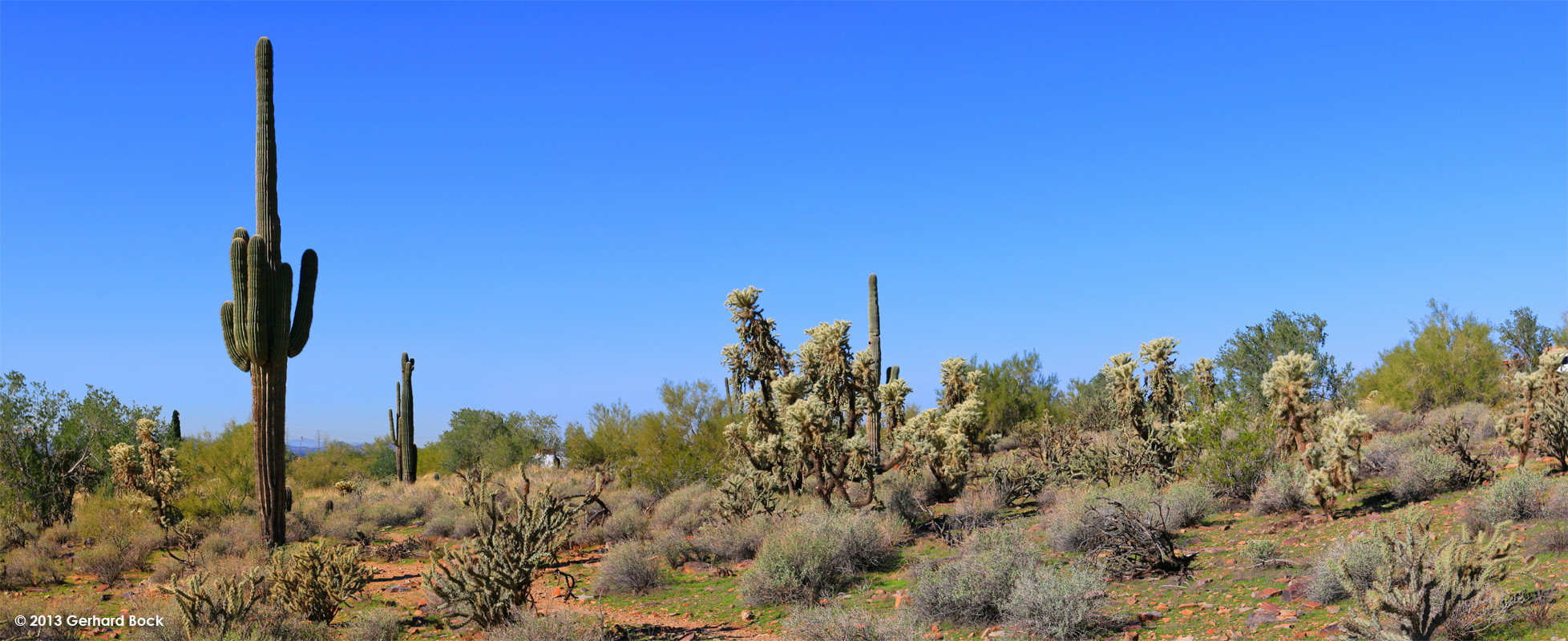 Succulents and More: Arizona day 5—Taliesin West ...