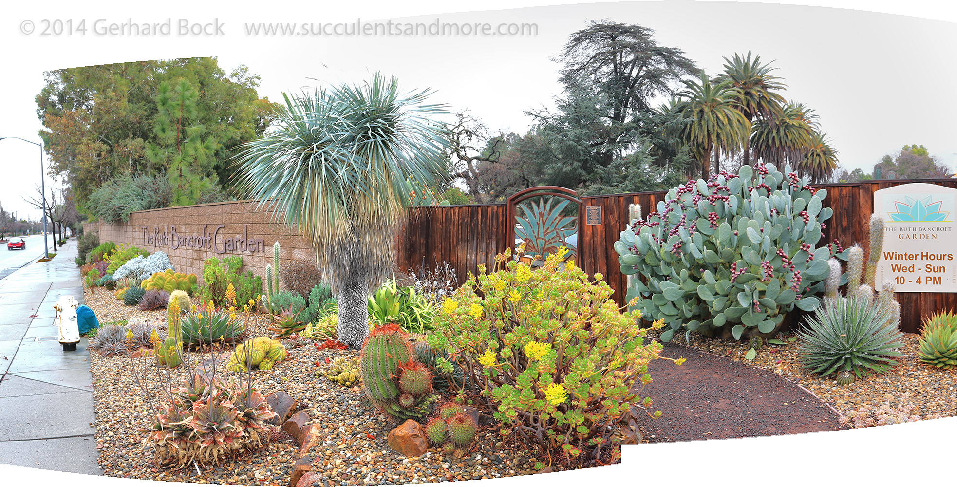 Succulents And More Entrance Plantings At Ruth Bancroft