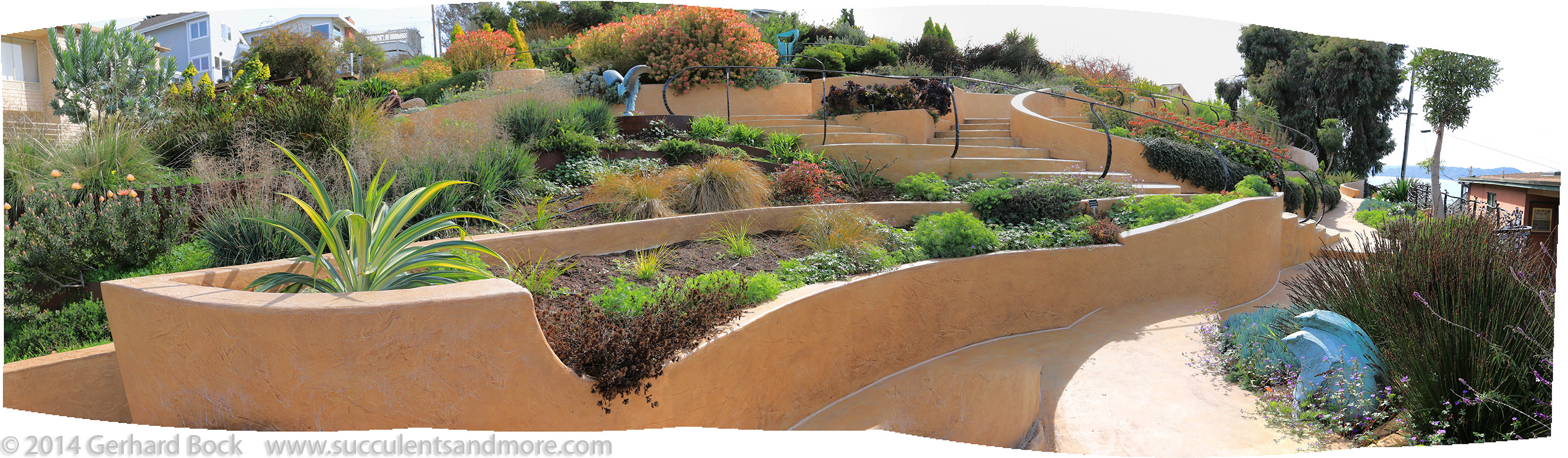 Succulents and More: Wave Garden, Point Richmond, CA